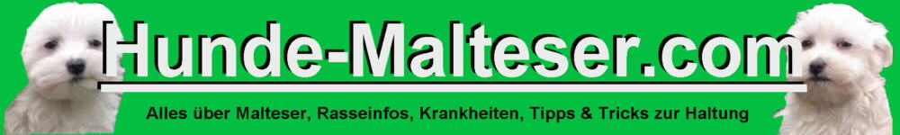 Infos Hunderasse Malteser Hund Rassebeschreibung